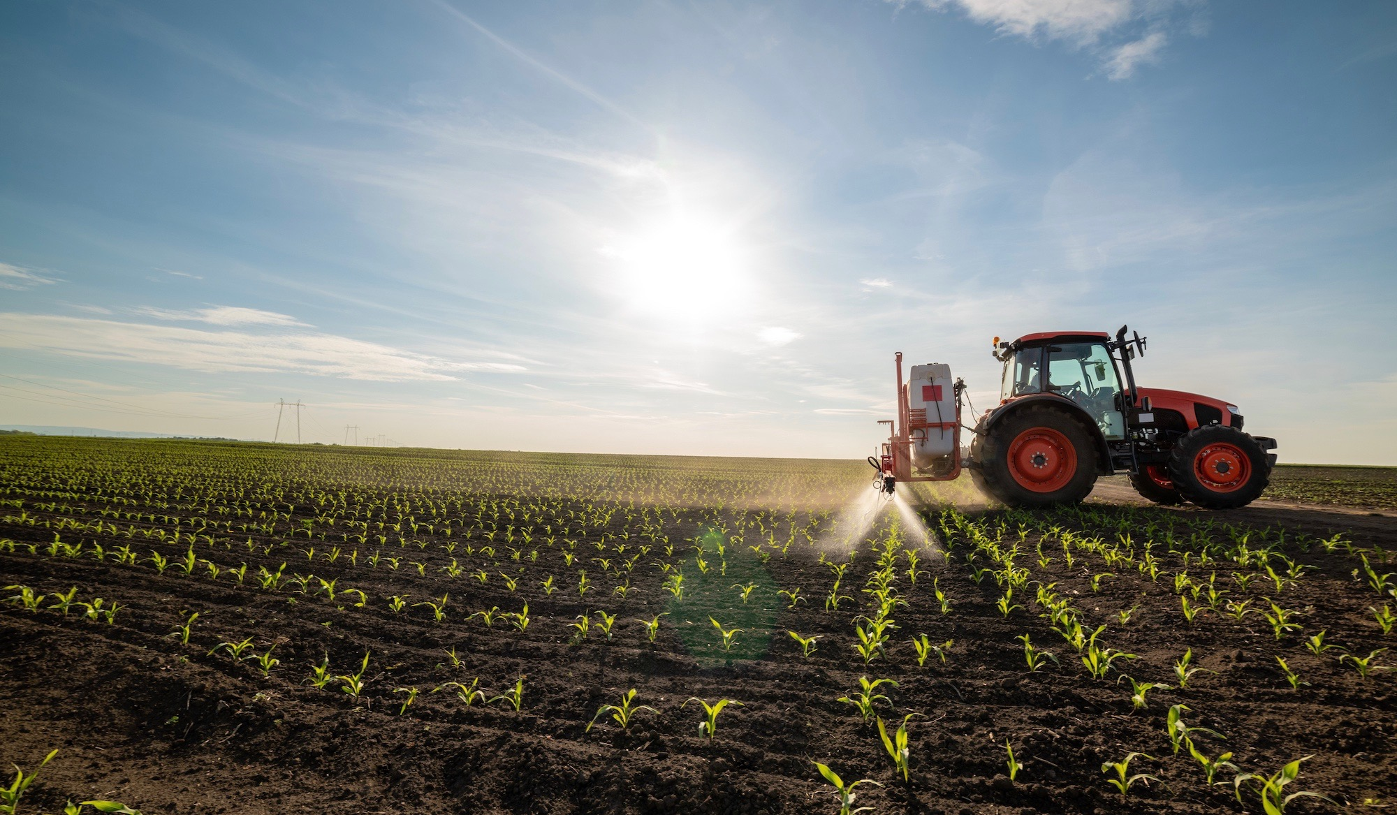 Tractor spraying young corn